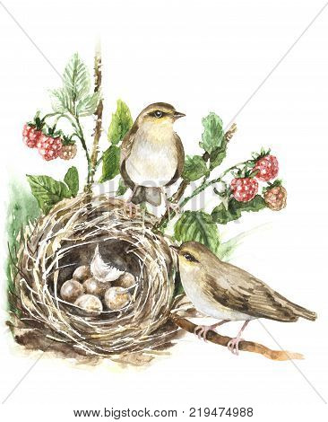 Watercolor painting. Hand drawn animalistic illustration. Couple songbirds and nest with eggs isolated on white. Bird family aquarelle sketch. Birds house on ground hidden in grass and raspberry plant.