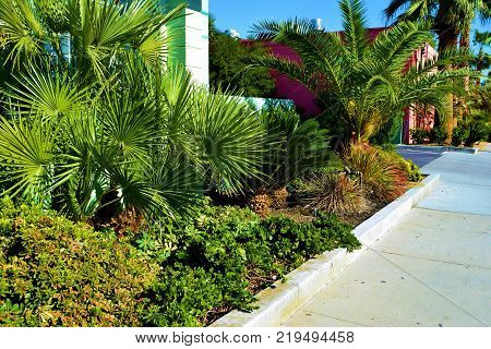 Lush green tropical plants beside colorful buildings taken in an urban neighborhood
