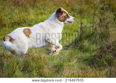 homeless dog runs in the green field