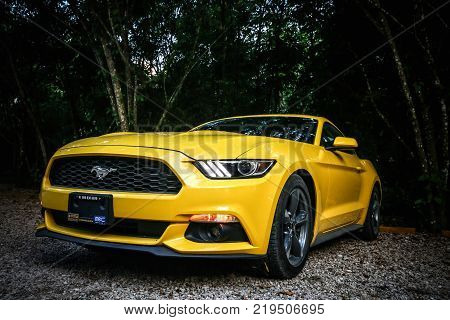 Palenque Mexico - May 23 2017: Yellow muscle car Ford Mustang in the dark deep forest.