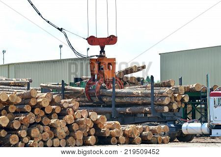 Loglift crane offloading logs from log transport truck