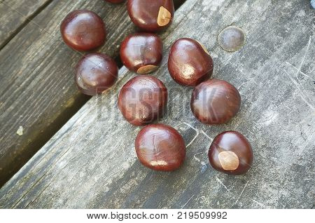 Buckeye Nuts on a Wooden Picnic Table