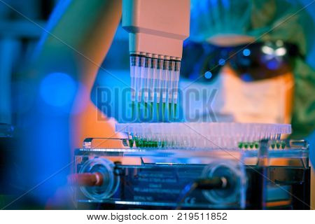scientist loads pcr plate for DNA analysis with multichannel pipette