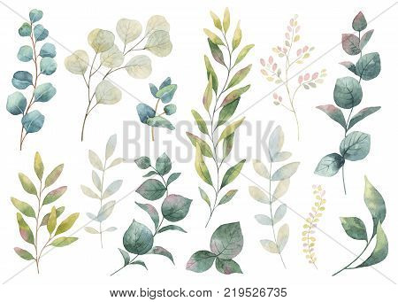 Hand drawn watercolor set green herbs, wildflowers and spices. Floral background for design of natural food, kitchen, market, textiles, decorations. Beautiful rustic card on white backdrop.
