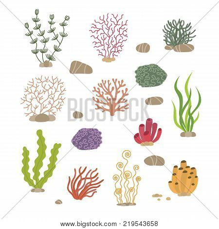 Seaweed, corals and stones. Underwater natural plants isolated. Coral and underwater marine plant. Vector illustration. Isolated on white background
