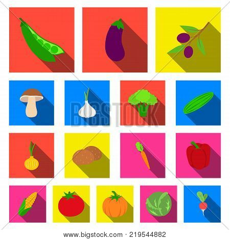 Different kinds of vegetables flat icons in set collection for design. Vegetables and vitamins vector symbol stock  illustration.