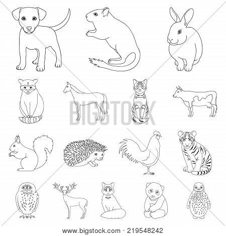Realistic animals outline icons in set collection for design. Wild and domestic animals vector symbol stock  illustration.