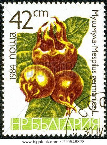Ukraine - circa 2017: A postage stamp printed in Bulgaria shows drawing Medlar Mespilus germanica. Series: Fruits. Circa 1984