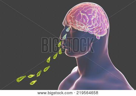 Brain-eating amoeba infection, naegleriasis. Nasal passage of Naegleria parasites and infection of brain, 3D illustration