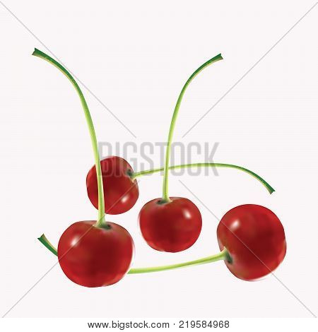 Four appetizing mature cherries on a pink background