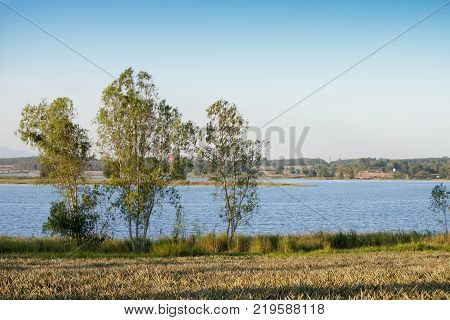 The tree beside the reservoir with a pineapple farm in front.at Dok Krai Reservoir Rayong Thailand.