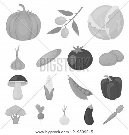 Different kinds of vegetables monochrome icons in set collection for design. Vegetables and vitamins vector symbol stock  illustration.
