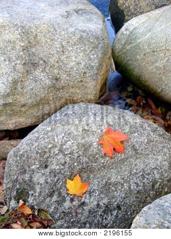 Fall Leaves On Rock