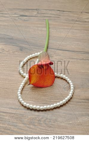 A string of pearls displayed with a yellow arum lilly