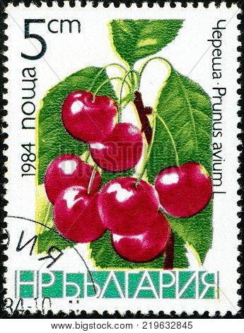 Ukraine - circa 2017: A postage stamp printed in Bulgaria shows drawing Sweet Cherry, Prunus avium. Series: Fruits. Circa 1984.