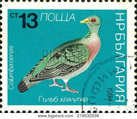 Ukraine - circa 2017: A postage stamp printed in Bulgaria shows drawing Bird Stock Dove, Columba oenas. Series: Birds. Circa 1984.