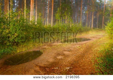 Path In A Fog With A Pine Wood