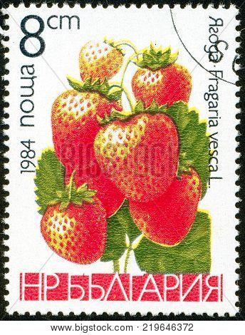Ukraine - circa 2017: A postage stamp printed in Bulgaria shows drawing Wild Strawberry Fragaria vesca. Series: Fruits. Circa 1984.