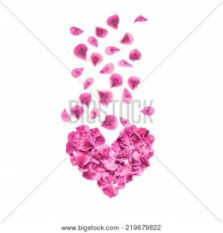 Heart made of rose petals. Red rose petals heart over white background. Top view. Love and romantic theme. Valentines day.