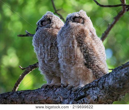 Beautiful photo of an owl
