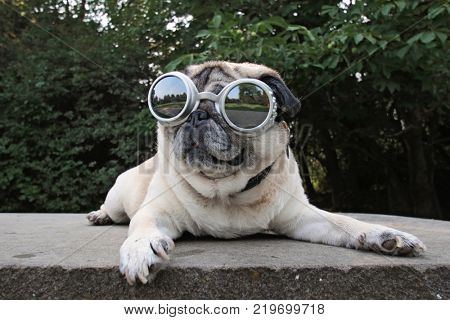 an adorable pug sitting in a park with aviator goggles on toned with a vintage retro filter