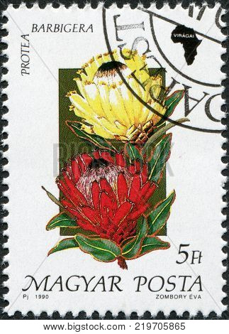 HUNGARY - CIRCA 1990: A stamp printed in Hungary is depicted Protea barbigera circa 1990