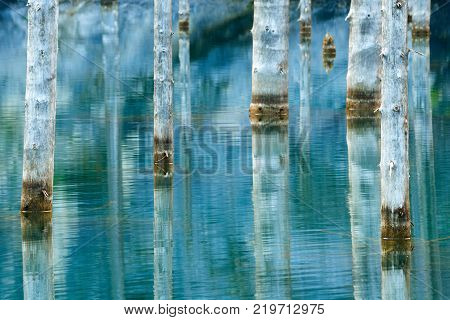 Dried-out trunks of submerged Schrenk's Spruce trees that rise above the water's surface from the bottom of the lake. The Sunken Forest of Lake Kaindy. Lake Kaindy, meaning the