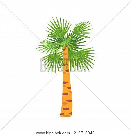 Mexican fan palm tree, symbol to warm country. Holiday, vacation, travel and trip to country Mexico, familiarity with the traditions, culture, sights, environment. Vector illustration isolated.