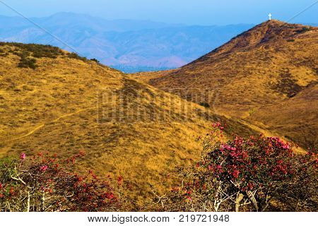 Flowers and plants overlooking an arid dry plain with golden grasslands taken in rural Central California