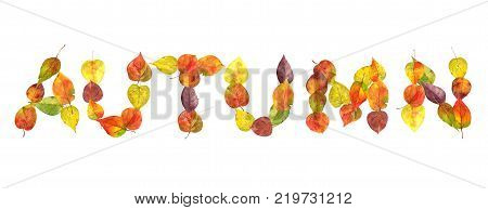 the word autumn from the fallen leaves, watercolor illustration