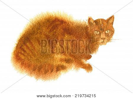 wattercolor drawing seated red tabby cat isoated at white background