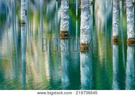 Reflection of trees on a green  background of lake. Lake Kaindy, meaning the