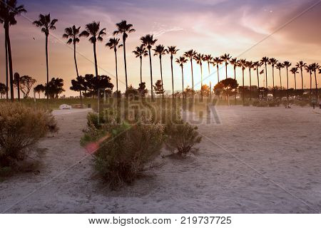 Palm trees lighted by evening sun against sky with clouds.Long beach Los-Angeles. Long Beach California USA