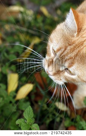 Yellow cat whiskers over the green grass close up
