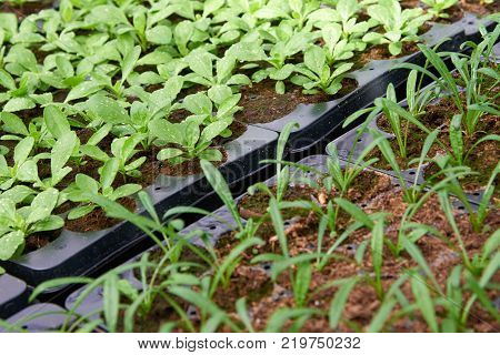 Seedlings for urban flower beds A flower/floral garden is any garden where flowers are grown and displayed.