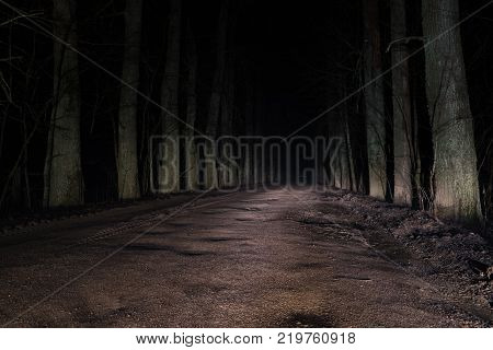 terrible mysterious road through the forest at night.
