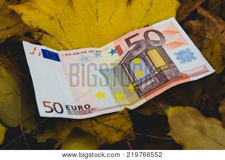 Euros on fallen yellow autumn leaves, the concept of falling price of the Euro