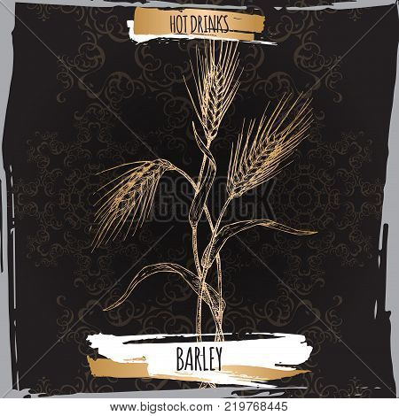 Barley aka Hordeum vulgare hand drawn sketch on black. Used as coffee substitute. Hot drinks collection. Great for cafe, bars, tea ads.