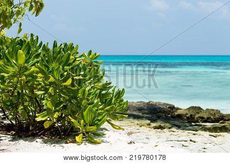 Coconut palm tree with bounty beach. Travel destination card, perfect getaway to Maldives island