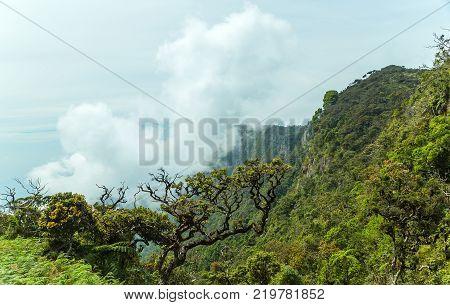 Wet grasslands & Sub-Montane and Montane forest Horton Plains National Park (Ohiya Sri Lanka)