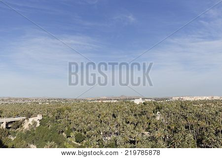Palm grove of elche with more than 200.000 specimens is the largest palm grove in Europe.