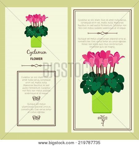 Cyclamen flower in pot vector advertising banners for shop design