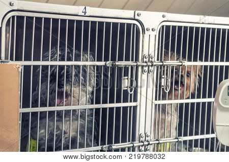 Convalescent pets in veterinary hospital. Sitting in cages.
