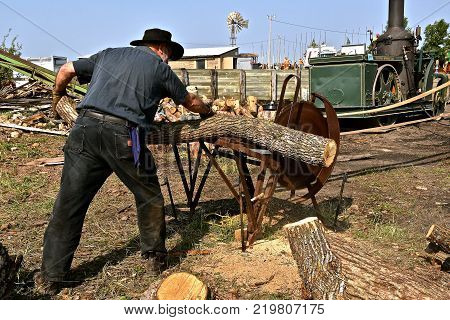 ROLLAG, MINNESOTA, Sept 2, 2017: An unidentified man is cutting logs  on a steam powered saw at the annual WCSTR farm show in Rollag held each Labor Day weekend where 1000's attend.