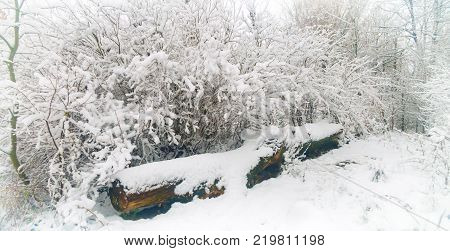 a fallen tree in a snowy winter forest