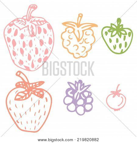 Cute hand drawn berry set. Sketch of strawberry raspberries foxberry blackberry on isolated on white background. Vector illustration.