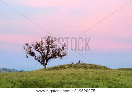 Lone Oak Tree Sunset. Sierra Vista Open Space Preserve, Santa Clara County, California, USA.