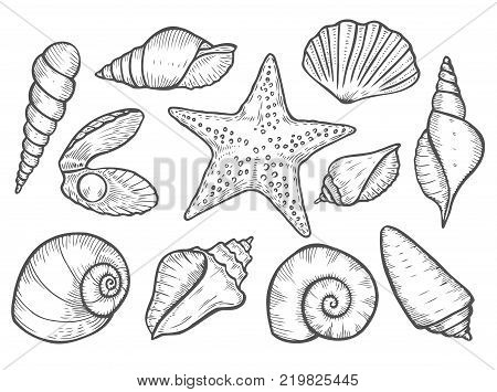Hand drawn Seashell, sea shell, starfish nature ocean aquatic underwater vector seashell set. seashell sea shell marine engraving illustration on white background