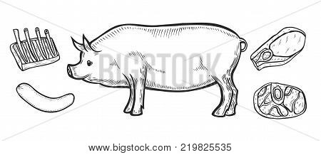 Hand drawn Pig, pork Meat ham cuts, parts, chop hand drawn butchery vector set. Engraved meat collection chalkboard.
