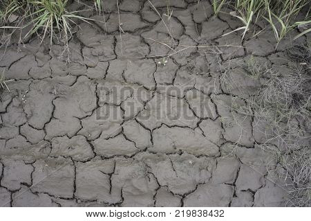 pieces near The ground with herbs and cracked earth.